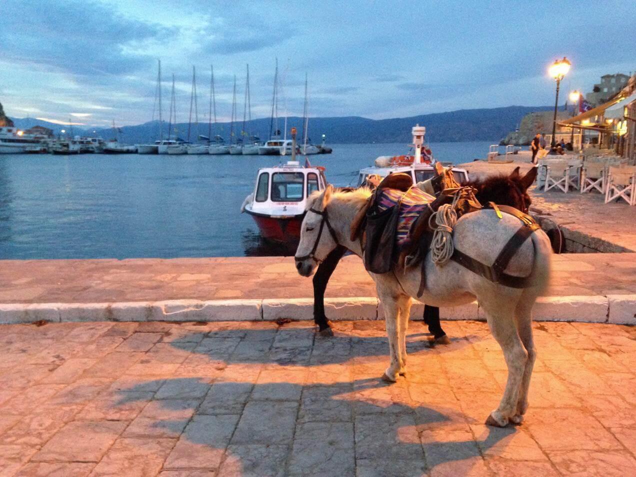 אתונה והמפרץ הסוראני - חמור