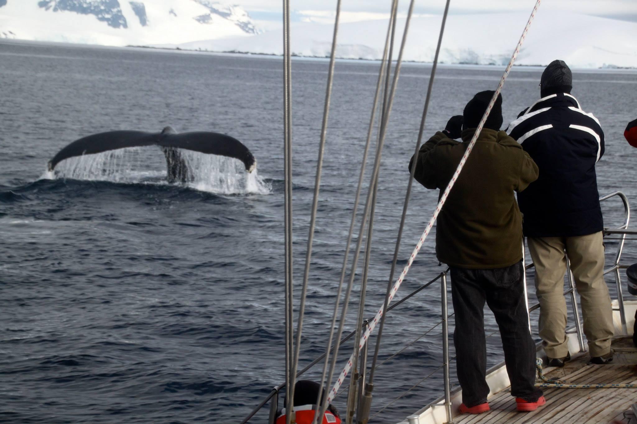 שייט באנטרקטיקה - משקיפים על לוויתן - דרך הים