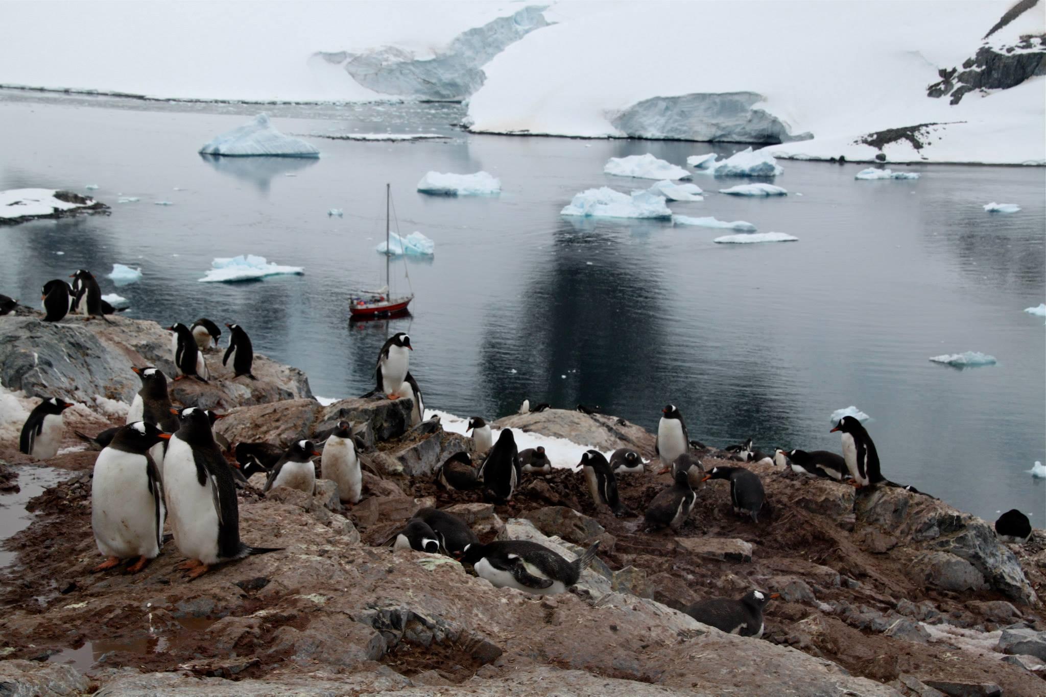 שייט באנטרקטיקה - עשרות פינגווינים - דרך הים