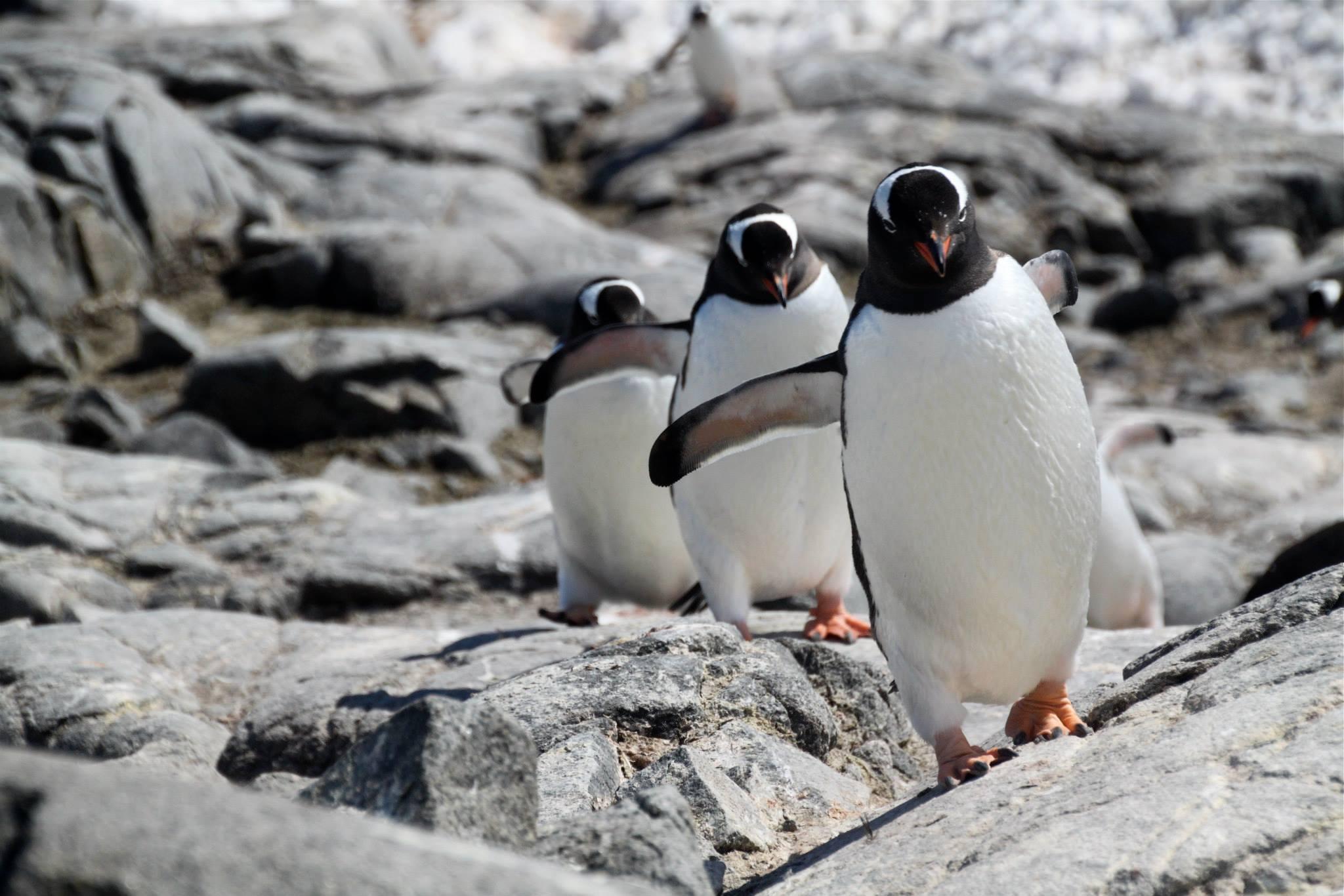 שייט באנטרקטיקה - פינגווינים - דרך הים