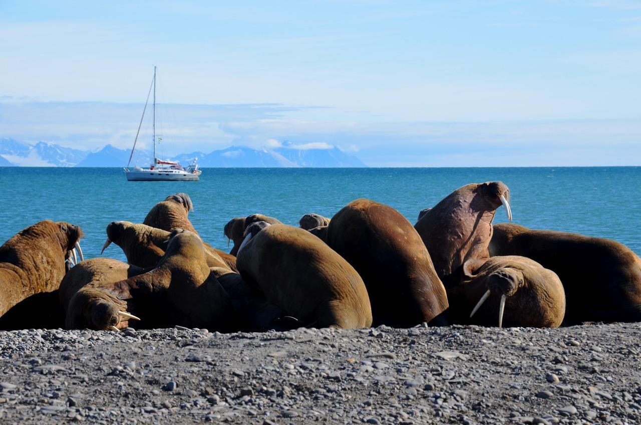 הפלגה לבסבאלבר - להקת כלבי ים - דרך הים