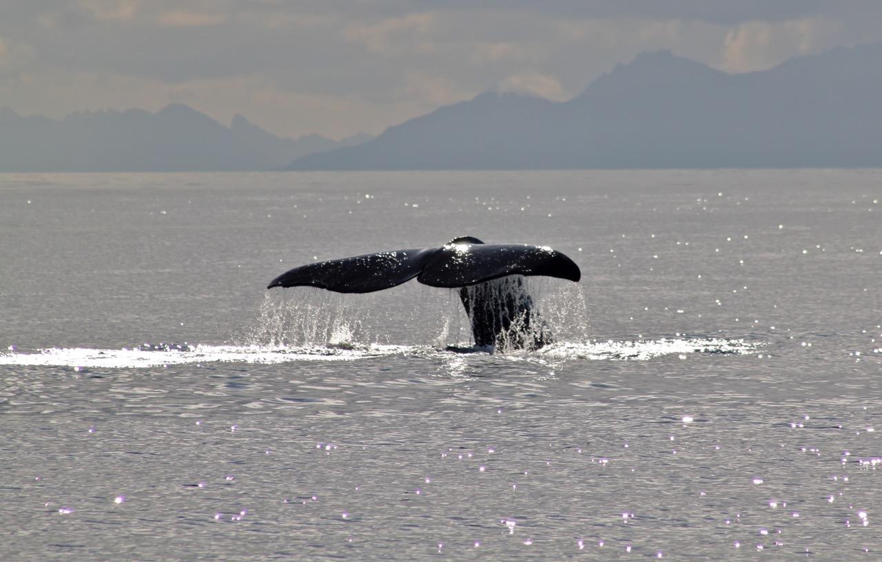 שייט בצפון נורווגיה - סנפיר של ליוויתן - דרך הים