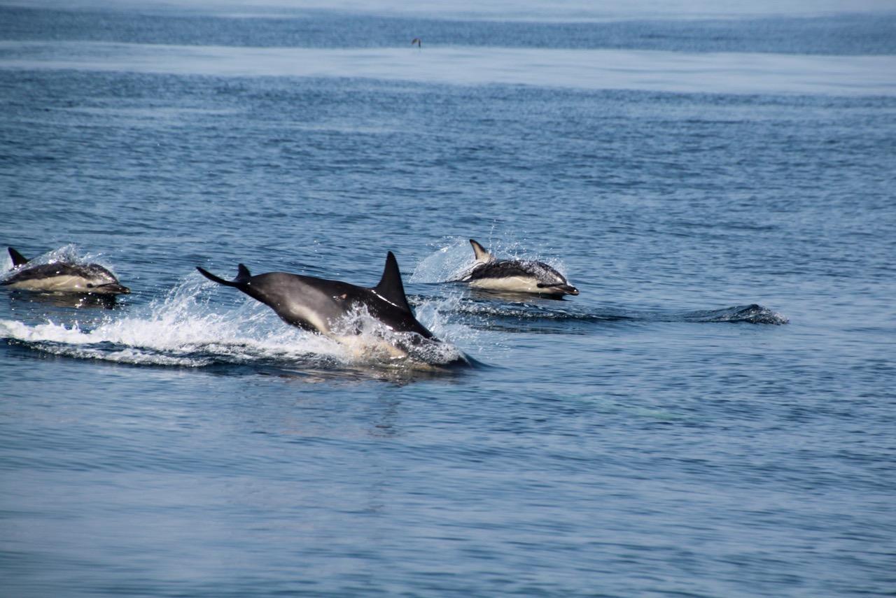 שייט בסקוטלנד - דולפינים | דרך הים