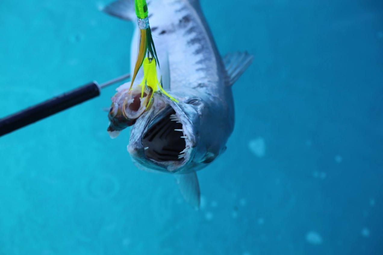 דג מפחיד
