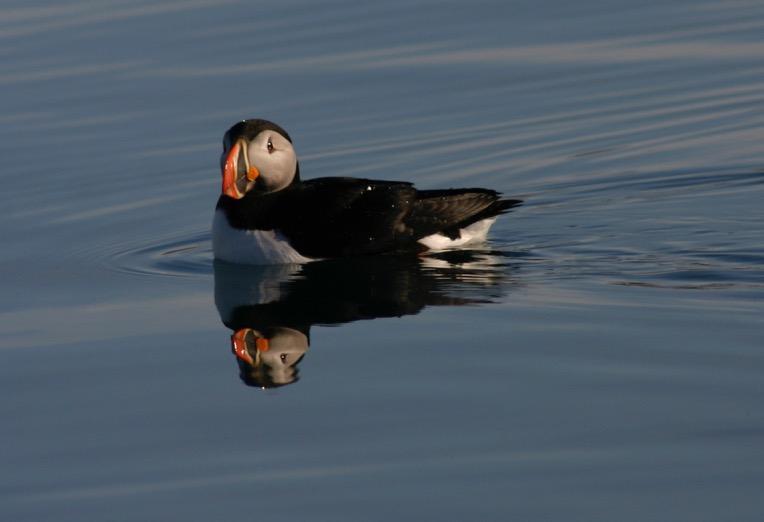 הפלגה לבסבאלבר - ציפור שטה על פני המים - דרך הים